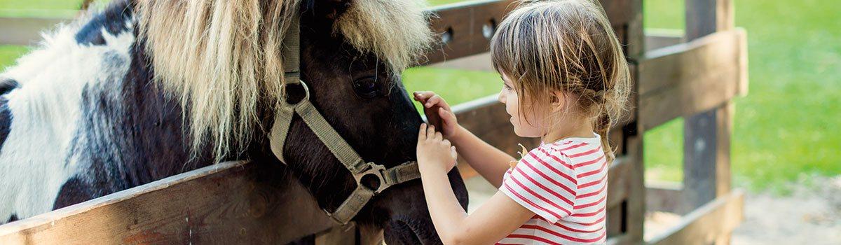 050__horses-carouselimage